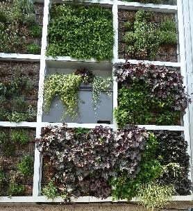 Fassaden- und Dachbegrünung in der Praxis