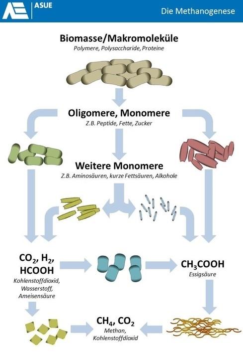 Wasserstoff und synthetisches Biogas - Perspektiven und Dimensionsanalyse - AkE Online
